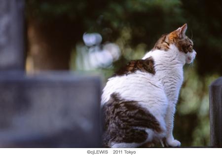 谷中猫001.jpg