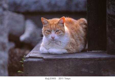 谷中猫004.jpg