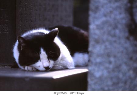 谷中猫005.jpg