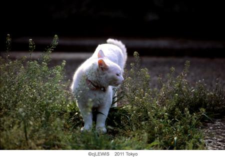 谷中猫009.jpg