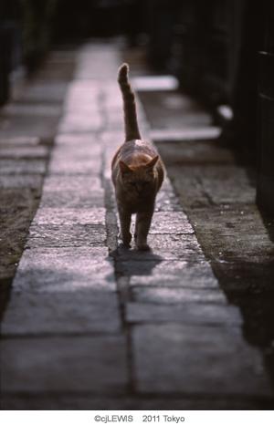谷中猫010.jpg