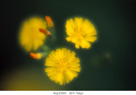 3_黄色い花2.jpg