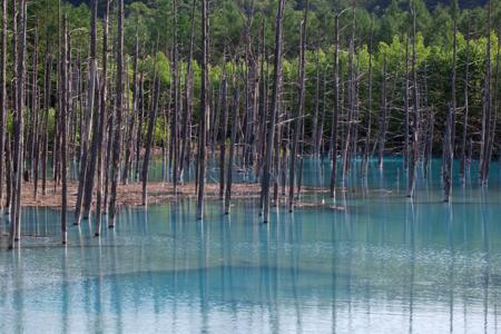青い池2-2.jpg